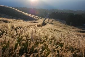 仙石原ススキ草原