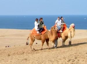 ラクダと砂丘