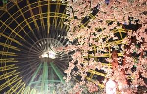 華蔵寺公園の夜桜