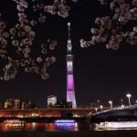 船上から楽しむ桜のお花見