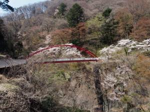 わらべ橋の桜