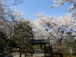桜山森林公園