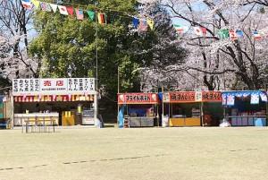 城之内公園桜