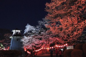 沼田公園桜