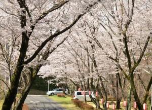 根本山桜まつり