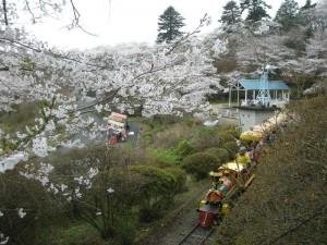 千手山公園さくら祭り