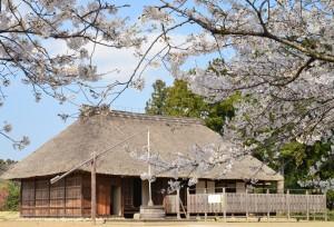 桜町陣屋桜まつり