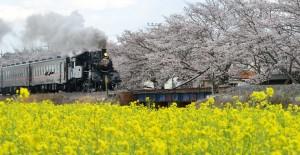北真岡地域ふれあい桜まつり