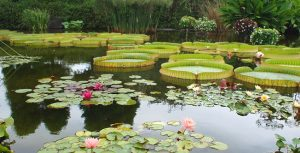 水生植物園公園みずの森