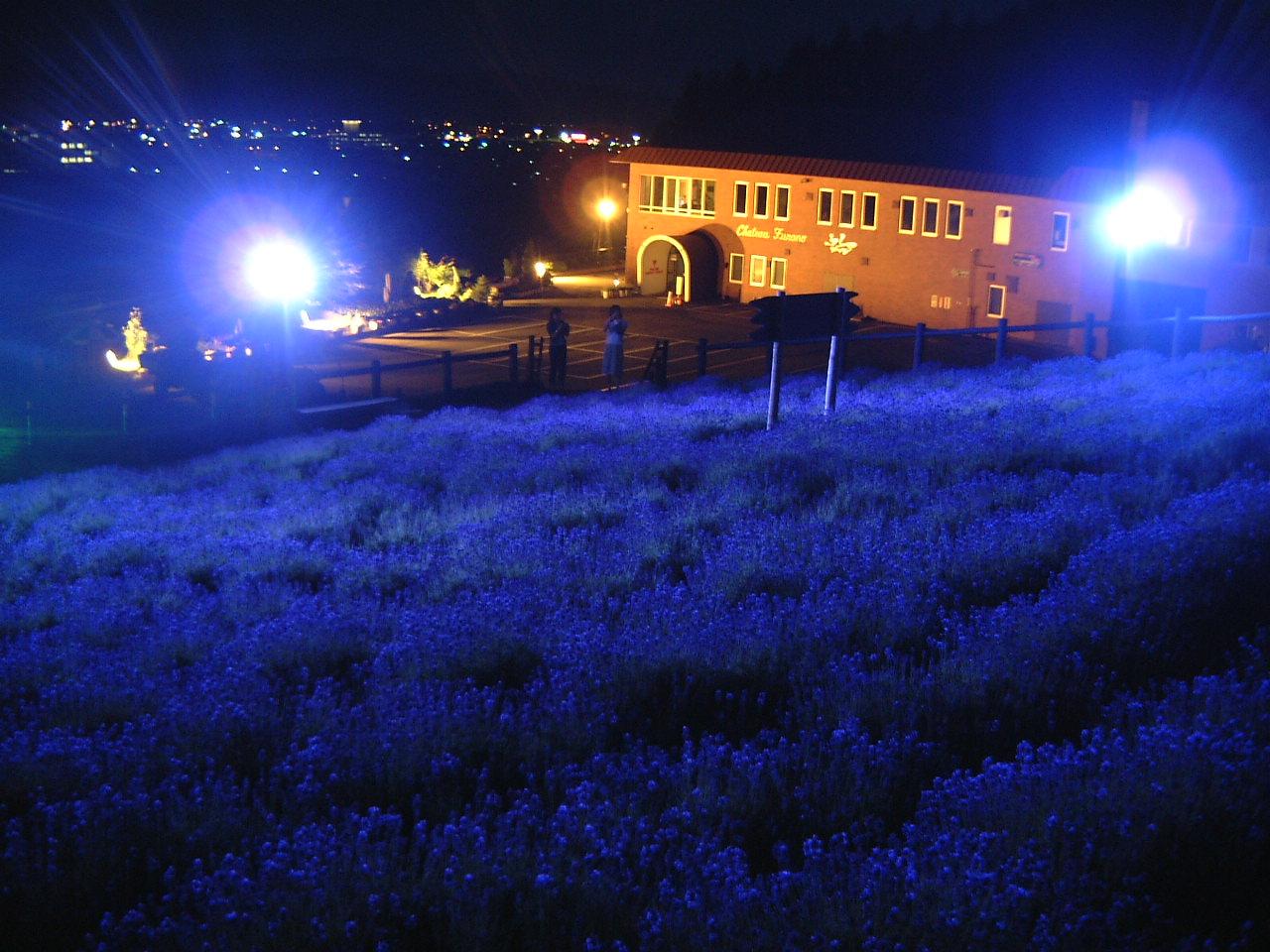 富良野ワイン工場 ラベンダー畑