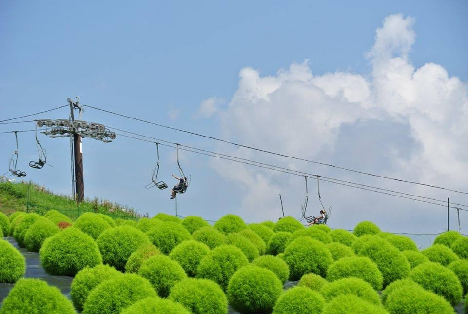 箱館山コキアパーク