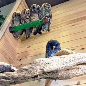 鳥のいるカフェ 木場店