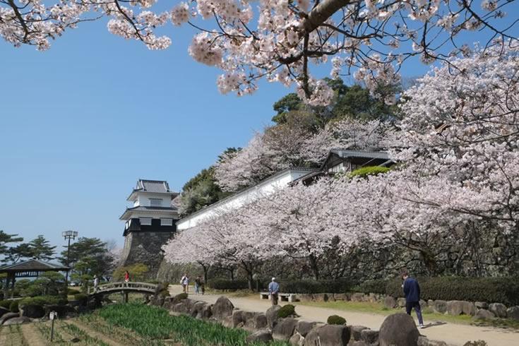 大村公園桜