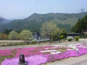 匠の聚芝桜