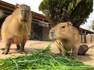 赤穂海浜公園 動物ふれあい村
