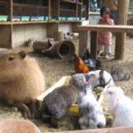 渋川動物公園1