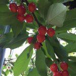 仲野観光果樹園