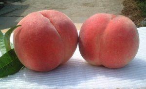雨宮農園桃