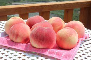 中島農園桃
