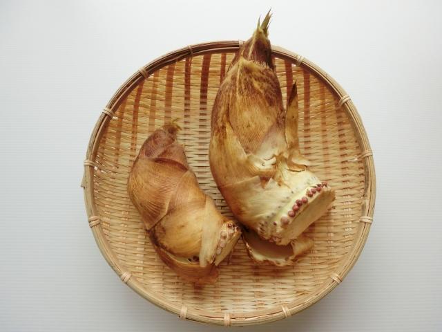 関西タケノコ掘り