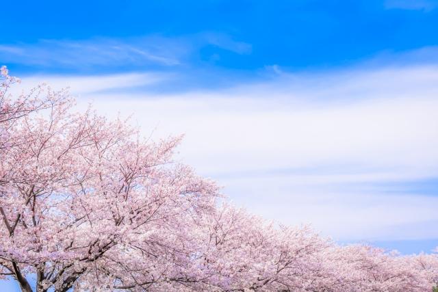 佐賀県桜名所